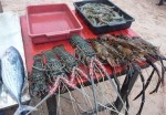 mirissa seafood